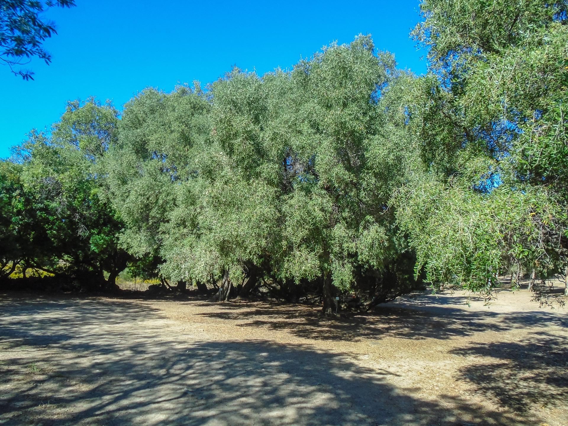 Camping L'Ostriconi