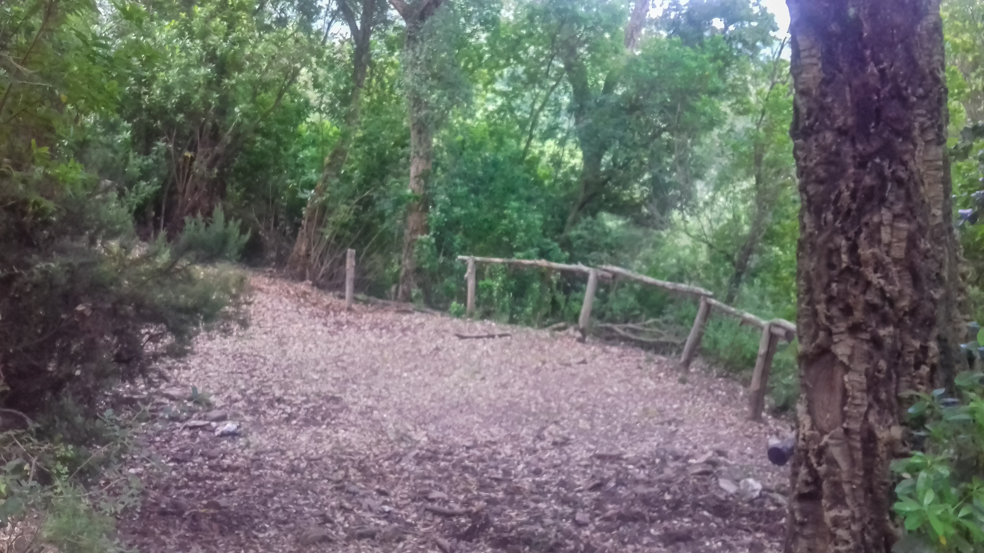 Camping Domain de Petra Pinzuta