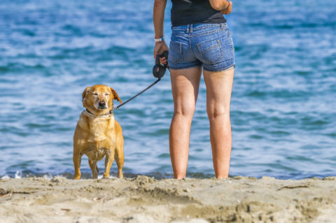 Camping auf Korsika mit Hund