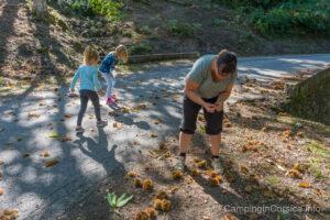 Kastanien sammeln im Herbst auf Korsika